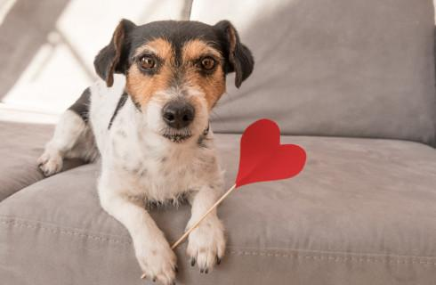 Kupno psa czasami może wymagać zapłaty dodatkowego podatku