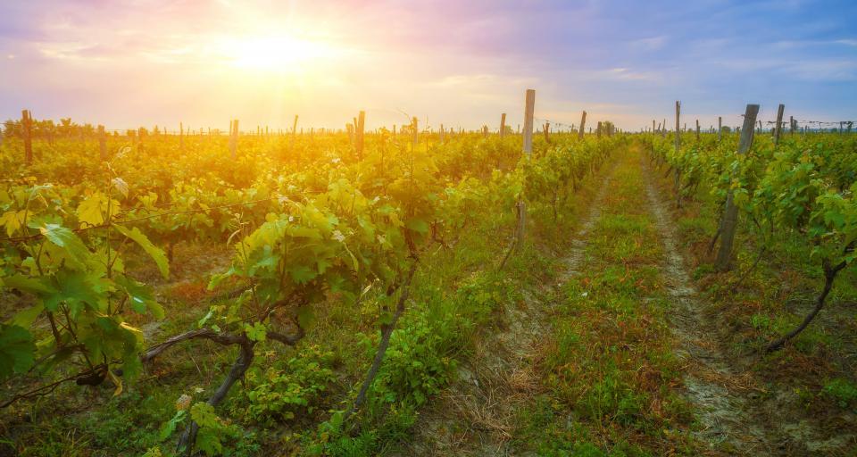 Polska dąży do bycia krajem wolnym od GMO
