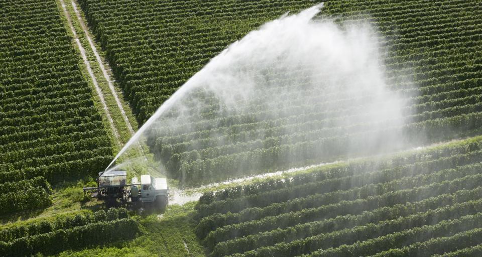 Greenpeace: pestycydy zagrażają pszczołom i produkcji żywności
