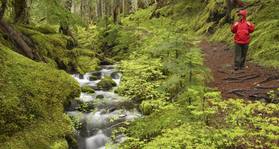Lasy Państwowe nagrodzone przez UNESCO