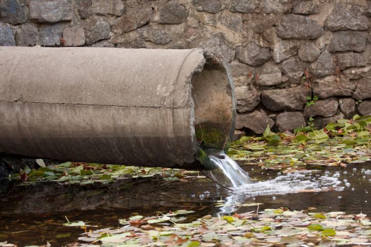 Do oczyszczania jezior i stawów można wykorzystać bakterie