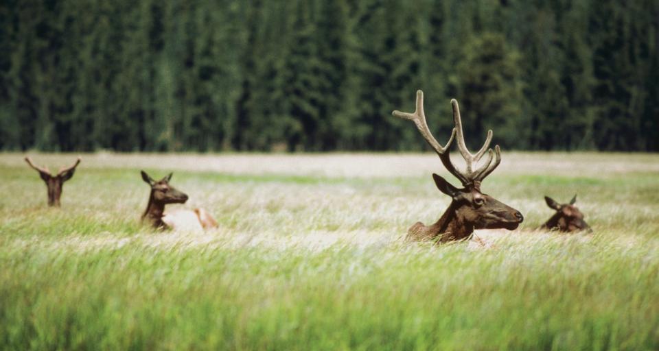 Odszkodowanie za szkody wyrządzone przez zwierzynę nie tylko dla rolników
