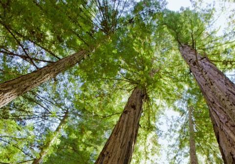 Podkarpackie lasy ostoją dzikiej zwierzyny