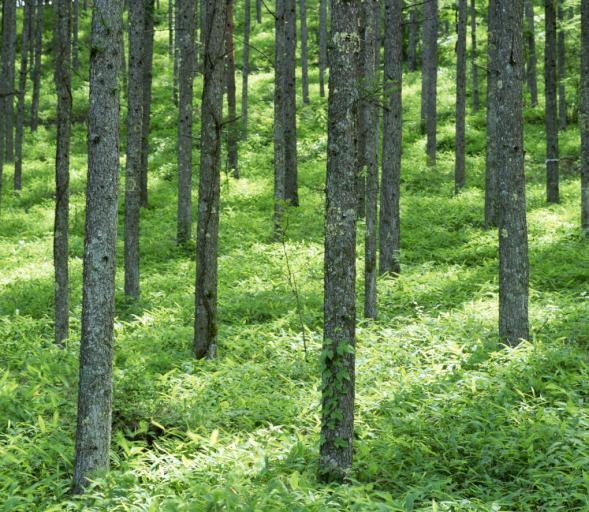 Gminy z parkami krajobrazowymi dostaną specjalne dopłaty