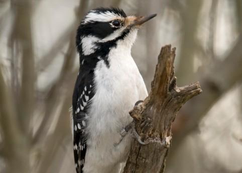Ekspert: budki lęgowe pomagają ptakom