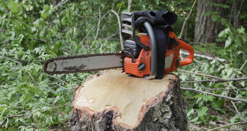 Wycinka drzew na prywatnej posesji bez zezwolenia