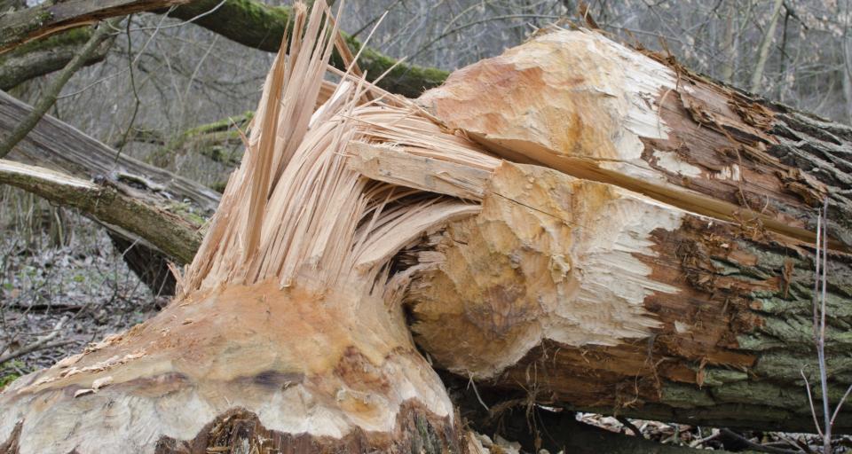 Wycinka drzew i krzewów na obszarach Natura 2000