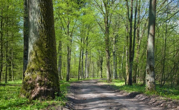 Warszawski ratusz zidentyfikuje nieużytki, które będzie można zmienić w tereny zielone