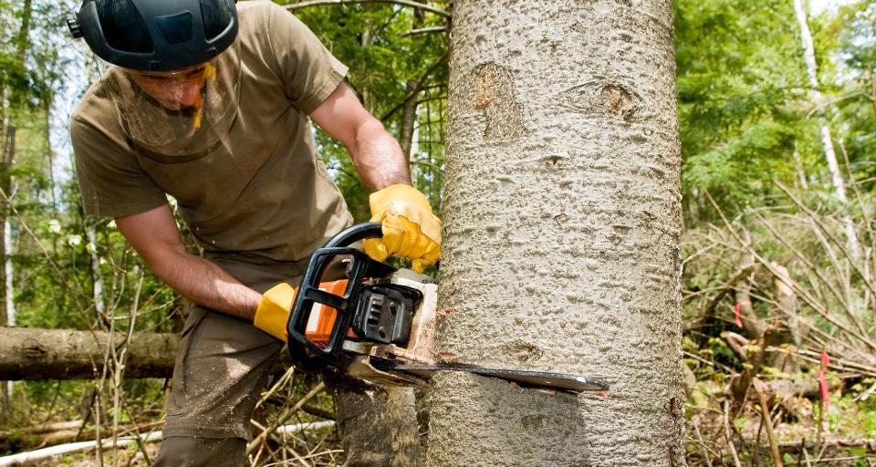 Kiedy trzeba zgłosić zamiar usunięcia drzewa?