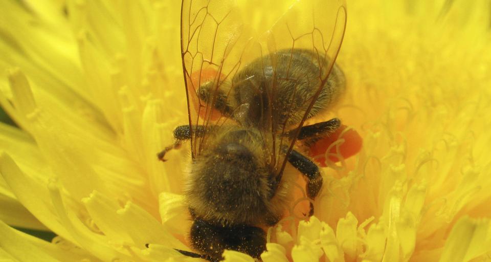NIK: pszczelarstwo wymaga kompleksowej strategii wsparcia
