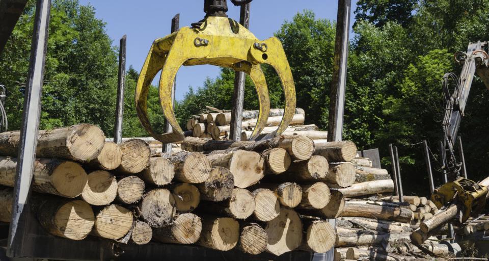 Ekspert leśnictwa: usuwanie skutków wiatrołomu to wielka praca; liczy się czas