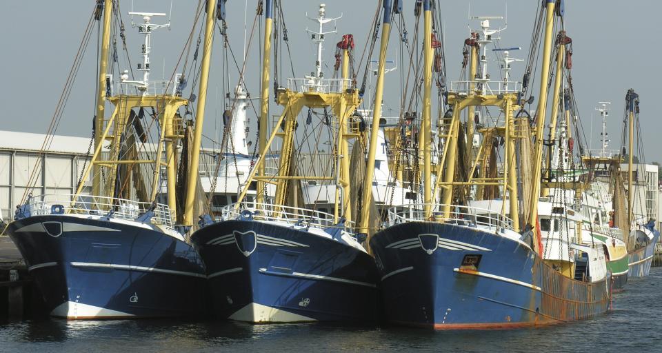 Chińscy rybacy skazani za połów chronionych rekinów