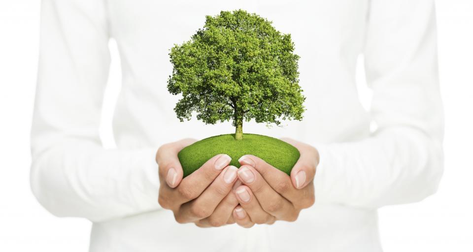 NFOŚiGW wyróżniony za wsparcie firm i samorządów w eko inwestycjach