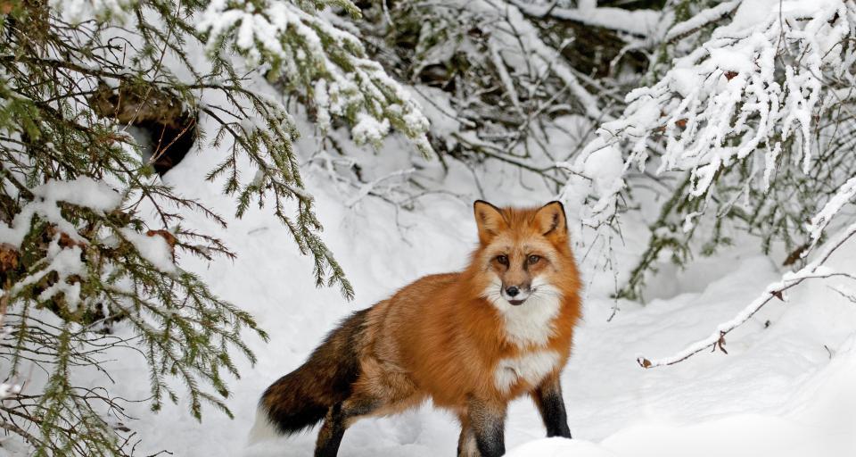 Podkarpackie: w lasach przybywa dzikiej zwierzyny