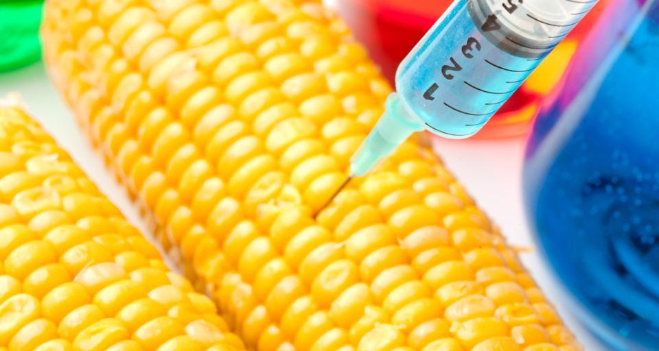 Powstanie rejestr upraw GMO