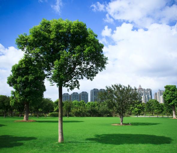 Kto składa wniosek o usunięcie drzewa rosnącego na granicy działek?