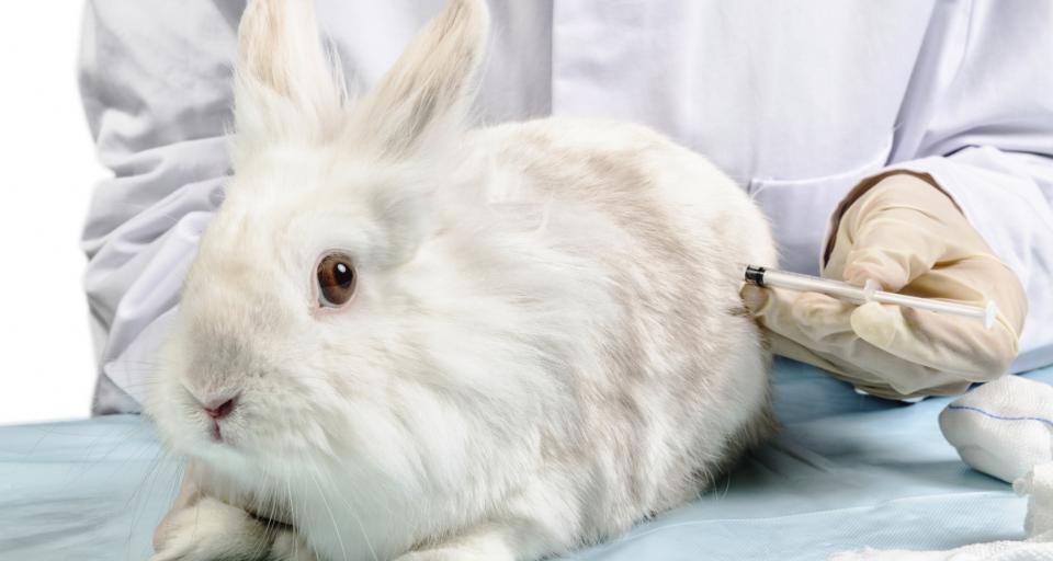 NIK: przepisy nt. wykorzystania zwierząt w badaniach nie dały rezultatów