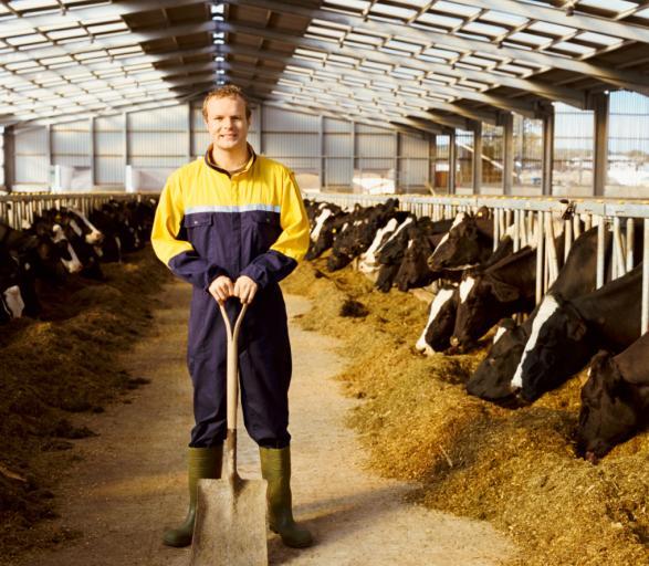 Rządowy program ma chronić zdrowie zwierząt i ludzi