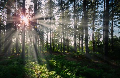 WSA: Uproszczony plan urządzenia lasu zablokował zmianę w ewidencji gruntów