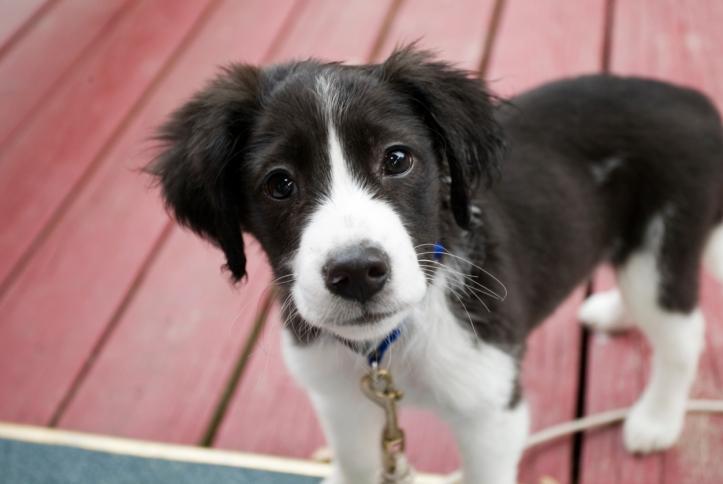 Zakaz wyprowadzania psa do parku? Prawo nie pozwala