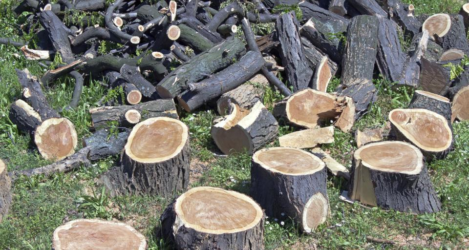 NSA: Wycinka drzew po ocenie ich wartości przyrodniczej