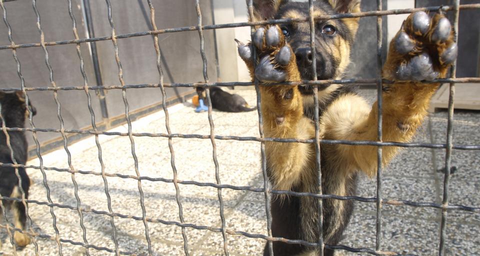 WSA: Program opieki nad bezdomnymi zwierzętami nie jest jedynie aktem planowania