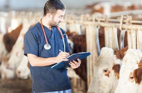 Wzmocnienie inspekcji weterynaryjnej ma uratować polską wołowinę