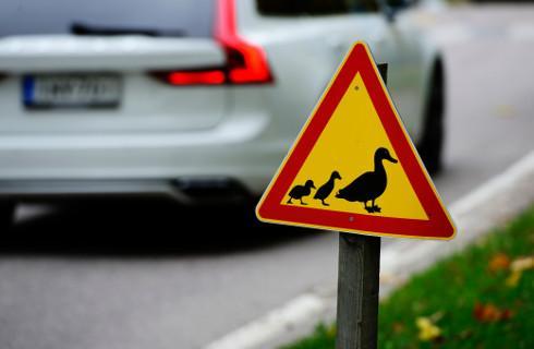 Uwaga jeż na drodze – znak nielegalny, ale pożyteczny