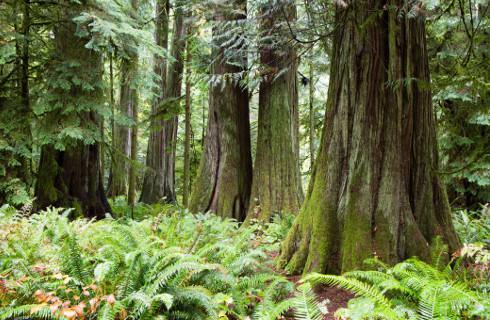 Gmina może nieodpłatnie przekazać drzewo pogorzelcom