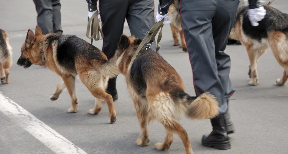 Emerytura dla służbowego psa? Niewykluczone