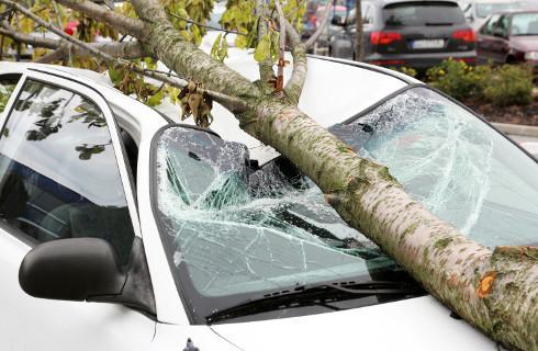 Regularny przegląd drzewostanu to za mało, by nie płacić za zniszczone auto