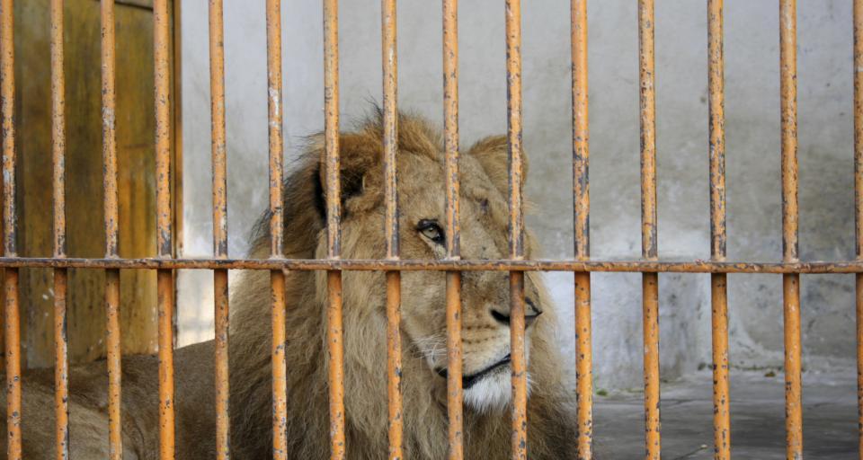 Rząd zapowiada stworzenie przy wschodniej granicy azylu dla zwierząt