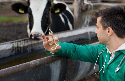 W trakcie kwarantanny rolnika jego zwierzętami ma się zająć gmina
