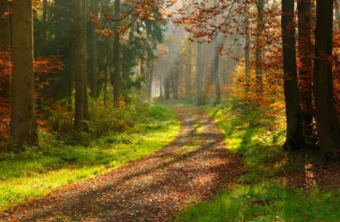 Zakaz wstępu także do lasów i parków narodowych