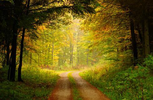 Po lesie można chodzić bez maseczki