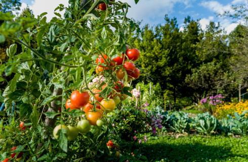 Wójt nie może zakazać podlewania ogródka
