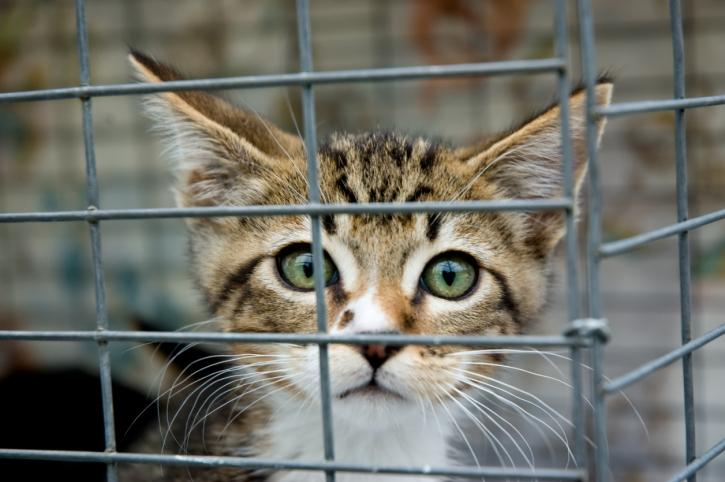Hodowca kotów pełnomocnikiem ds. ochrony zwierząt