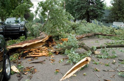 Sąd: Zarządca drogi powinien dostrzec nie tylko suche drzewa, ale i konary