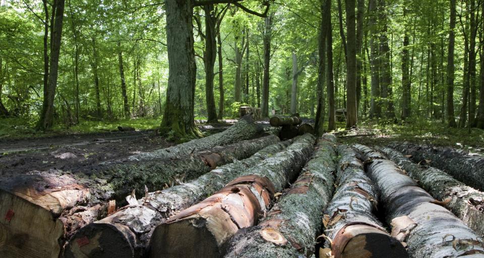 Sejm zakończył spór o nową definicję drewna energetycznego