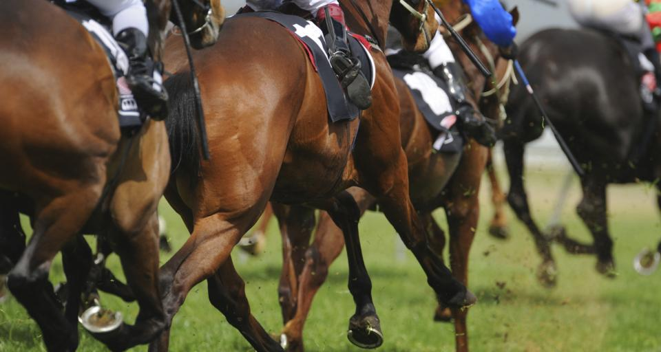 NIK o państwowej hodowli koni - rzetelnie, nie zawsze jednak gospodarnie