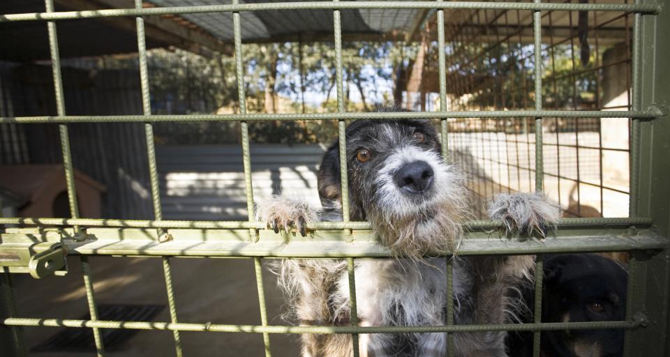 Sejmowa większość zdecydowała o pracach nad nowymi przepisami o ochronie zwierząt