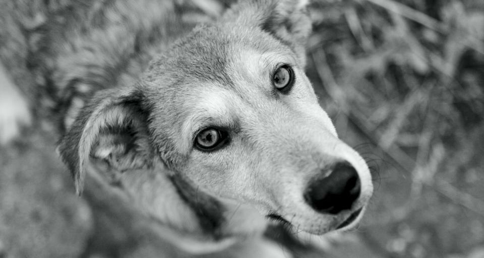 Spór o psa i kota rasowego rozstrzyga się w Senacie