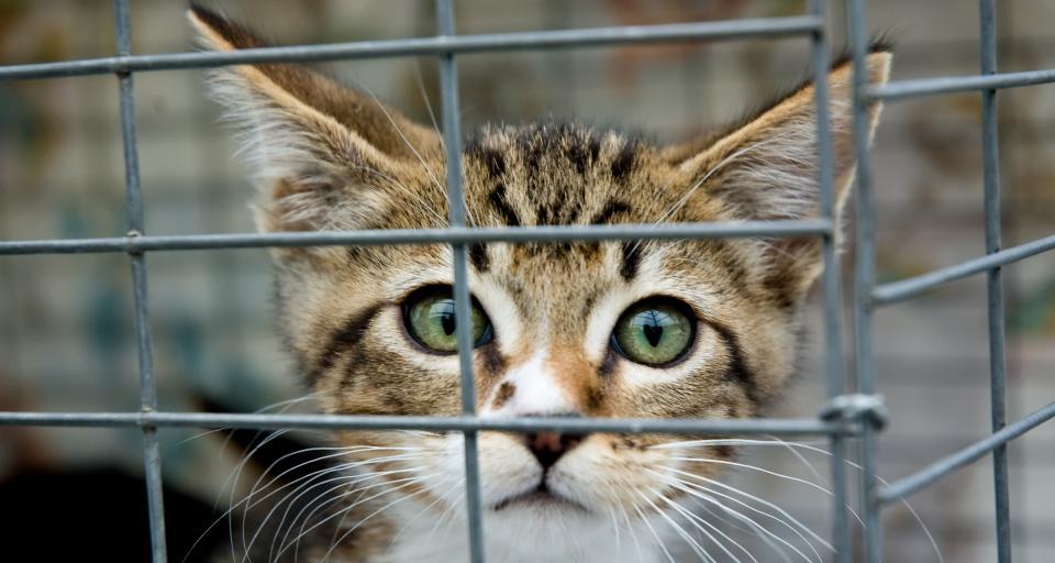 """Są poprawki PiS do """"piątki dla zwierząt"""""""