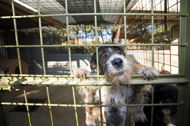 Ważą się losy przepisów o odbieraniu zaniedbanych zwierząt
