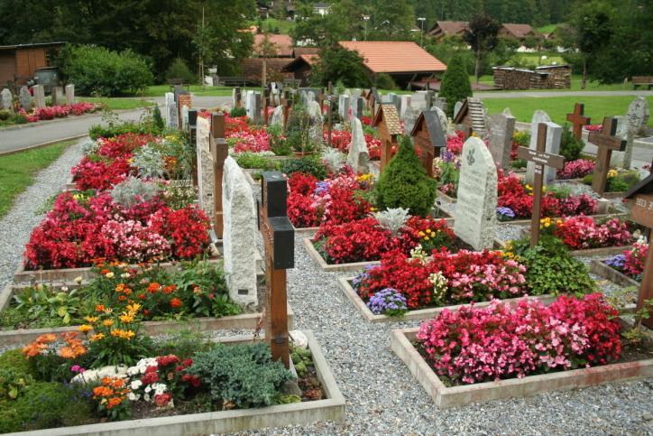 Zakaz wejścia na cmentarze: pomoc dla przedsiębiorców od 50 krzaków chryzantem
