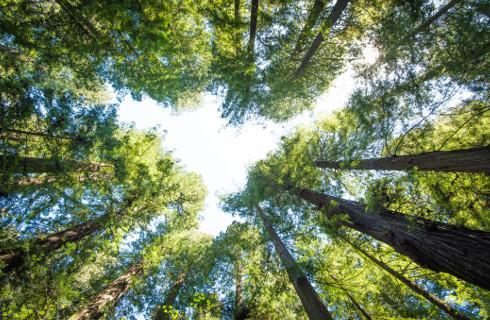 Przycięcie gałęzi drzew na terenie zakładu nie wymaga informowania urzędu