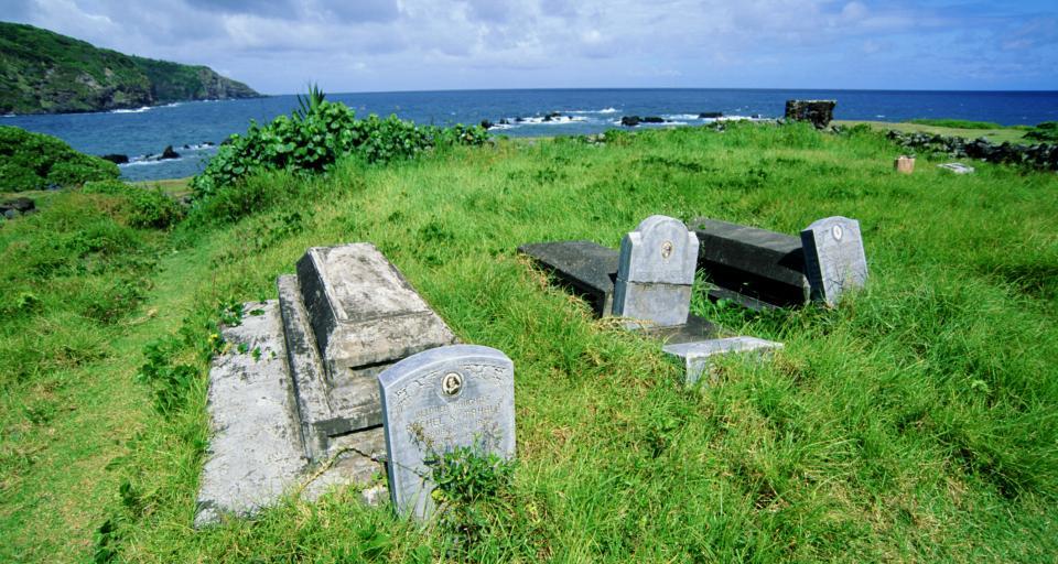 Grób w drzewie, prochy nad miastem? Trwają konsultacje o cmentarzach i nowych pochówkach