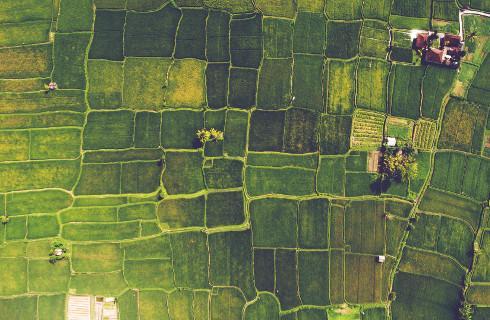 Dopłaty - rolnik zasiew udowodni geotagowanym zdjęciem